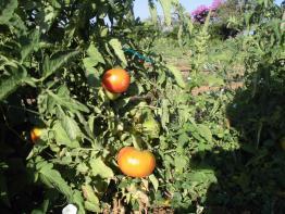 Agroturismo Na Set Centes, Arta, Mallorca